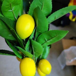 Lemon with greenery decor